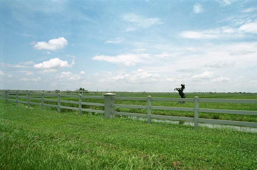 jumpinghorse.jpg