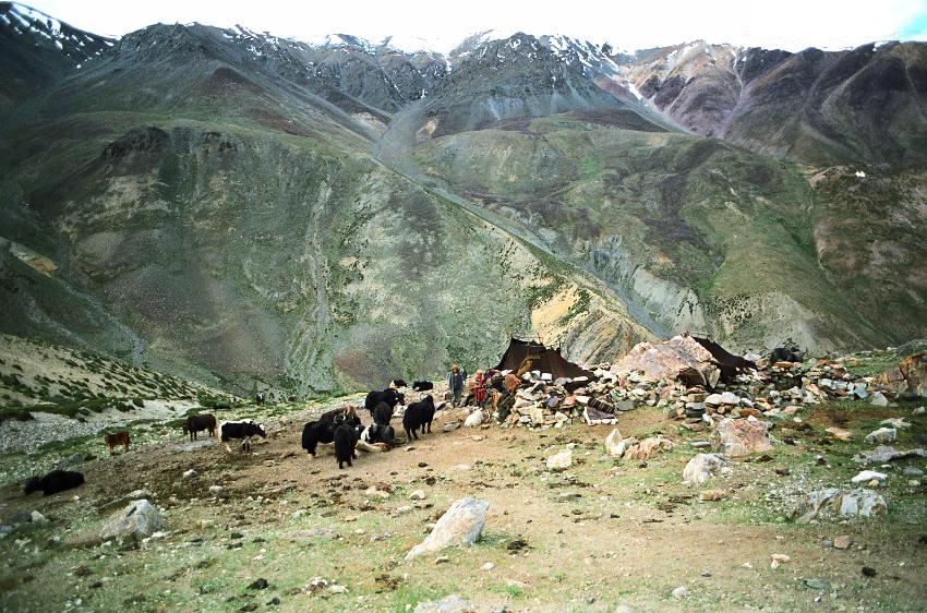 shepherdcamp.jpg
